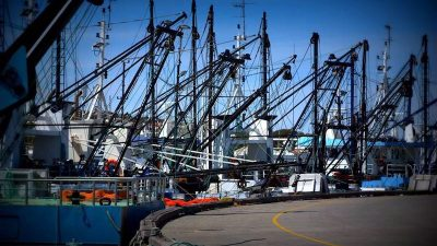 AFMA responds to Edgar et al. on Australian fishery stocks