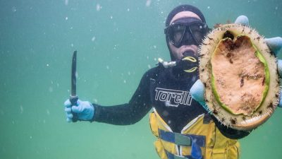 Abalone divers celebrate 50 years of buried treasure