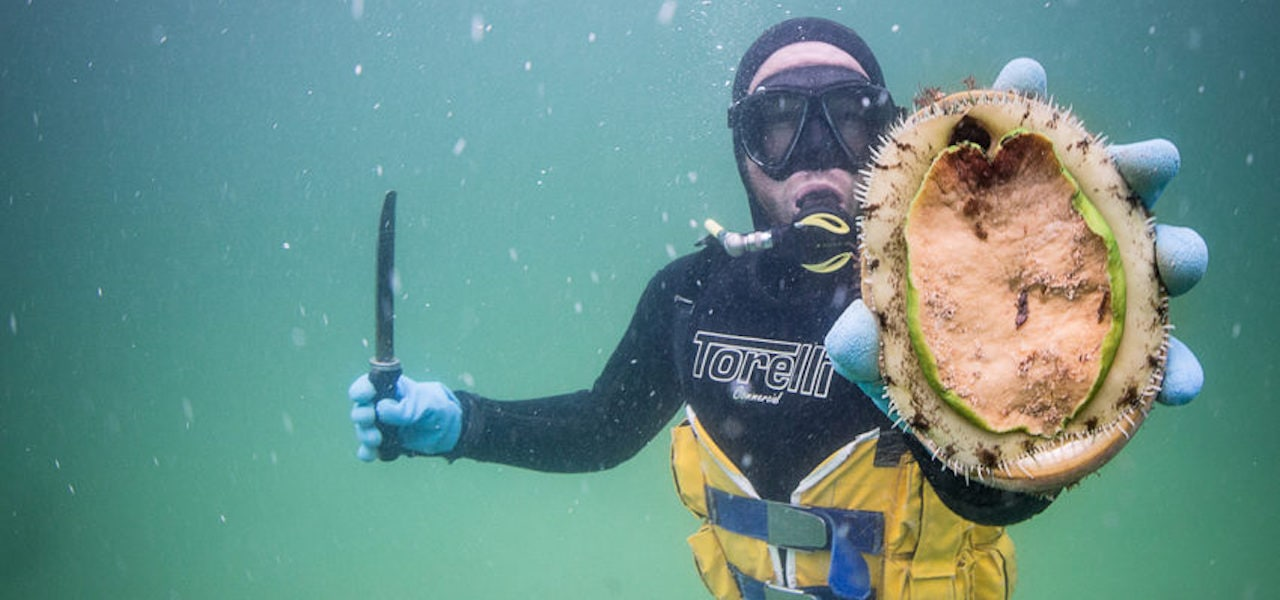 Abalone divers celebrate 50 years of buried treasure