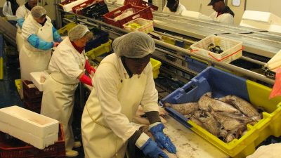 European fish processing sails through fitness check