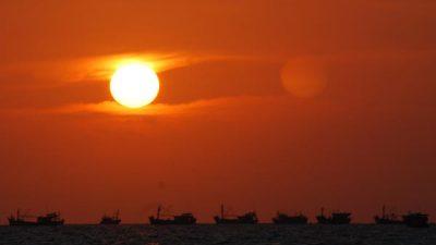 Asien: Stor efterspørgsel giver prispres på små pelagiske fisk.