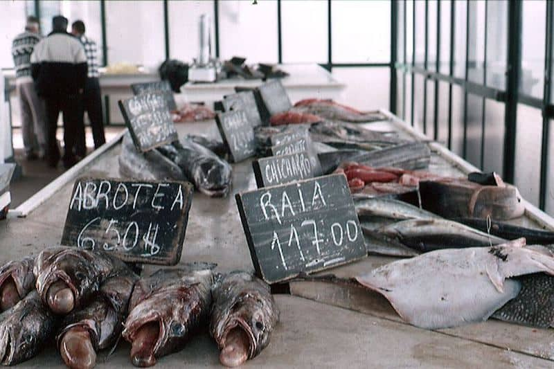 New rules to develop sustainable fisheries in EU's outermost regions