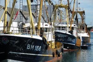 The Brixham fleet has seen spectacular reductions in discards since the 50% Project introduced modified trawl gears - @ Fiskerforum