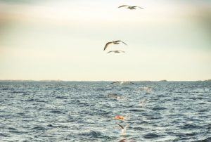 The new Baltic management plan is now in force - @ Fiskerforum