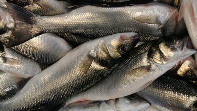 Fines for hiding bass in the bin