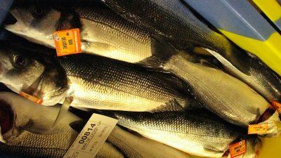 Winter, a good season for overfishing bass