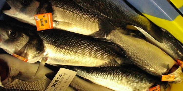Line-caught bass on a French auction - @ Fiskerforum