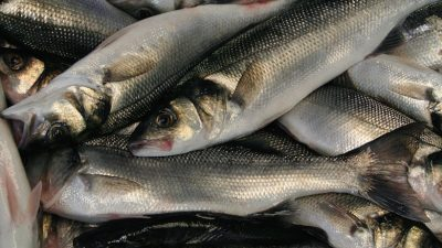 Bass ban will generate discards, says NFFO