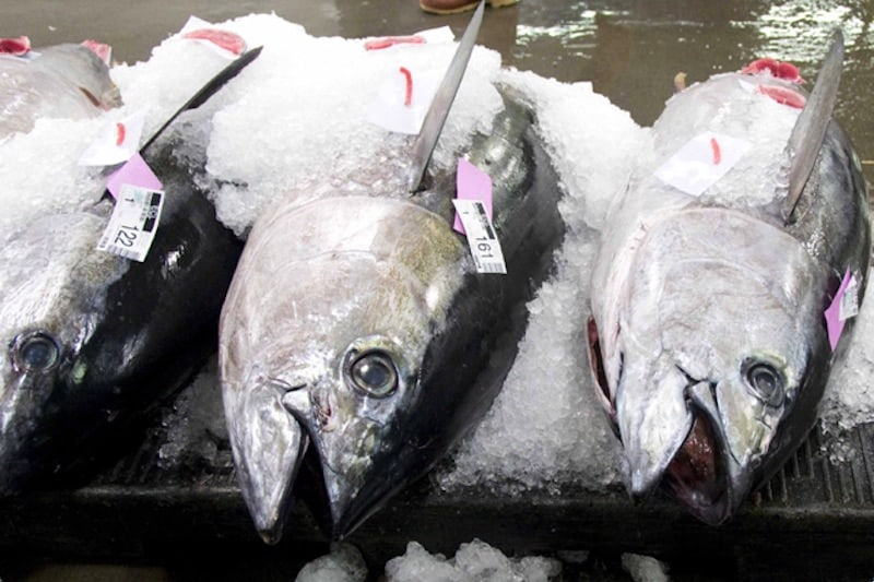 Read more about the article Missed opportunity at ICCAT; progress towards sustainable fisheries blocked