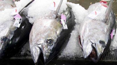 First fishery achieves MSC certification for bigeye tuna