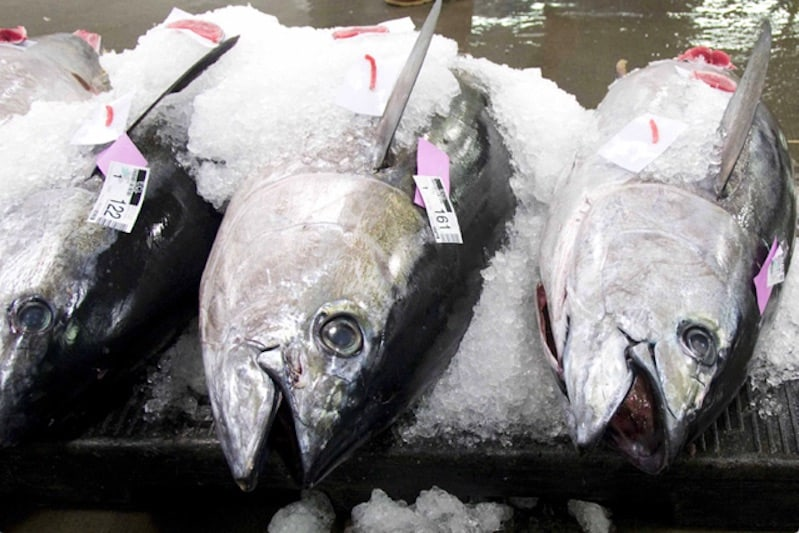 First fishery achieves MSC certification for bigeye tuna