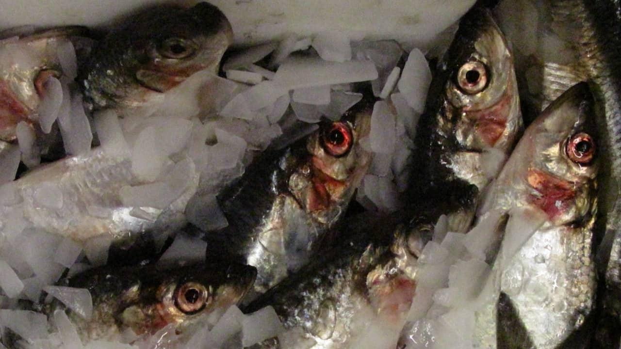 MSC suspends pelagic fisheries certification