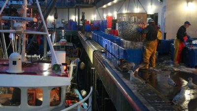 Mixed bag for SW and Channel fishermen