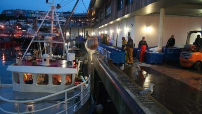 The risk of under-fishing, N-E Atlantic over-fishing has ended