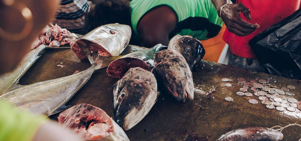 Fisheries rescue plan to guarantee Seychelles food security