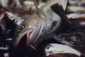 England's fishing industry is being sacrificed to appease Scots nationalism