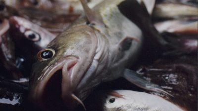English fishing sacrificed, says NFFO