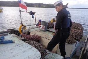 Seafood seized in Chiloé - @ Fiskerforum