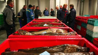 Quota cuts a death knell for western Baltic