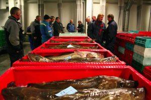 North Sea cod at auction - @ Fiskerforum