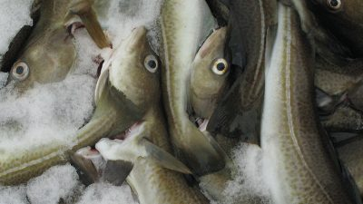 Cod trial report published