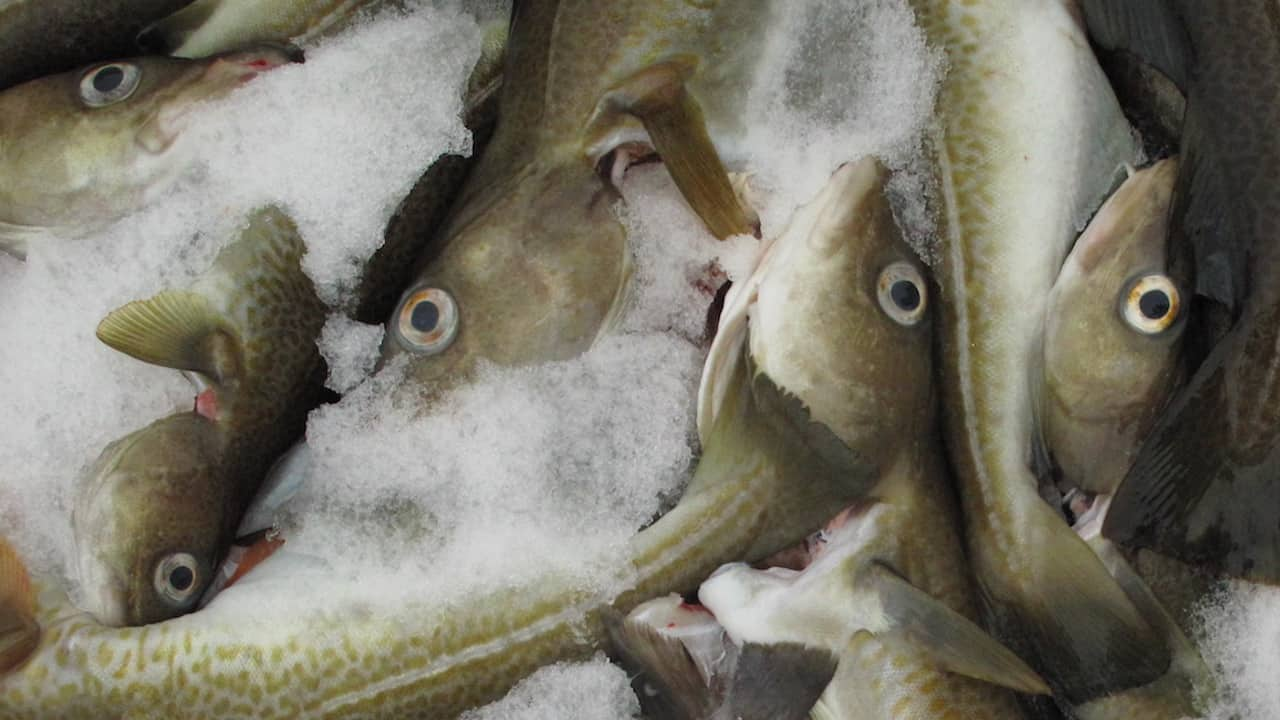 Canada and France agree on 3Ps cod fishery