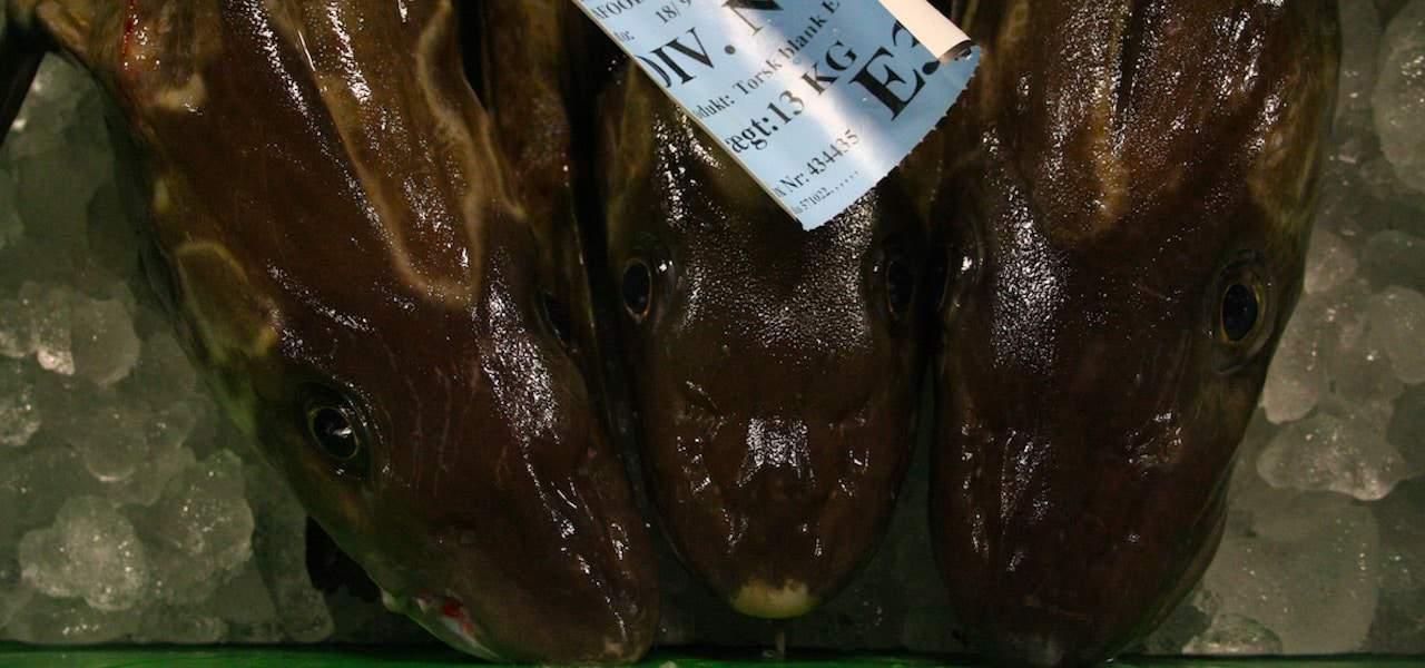 Third round of talks on 2020 North Sea cod TAC