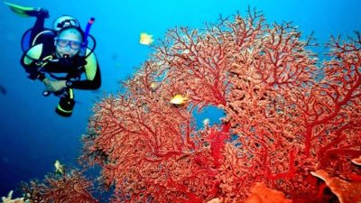 Coral harvesting five-year plan