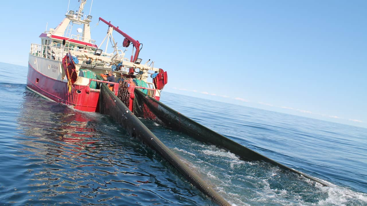 Read more about the article Danish Fisheries must become even more sustainable