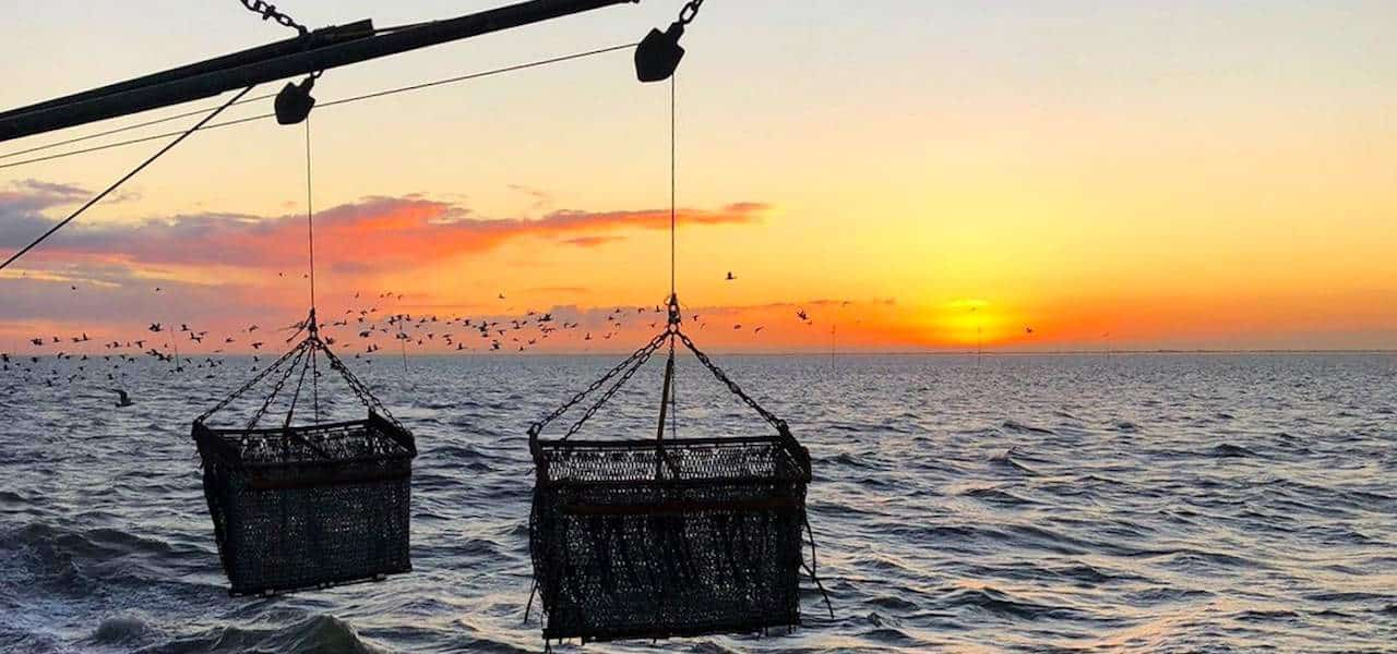 The future of mussel farming – Damen leads on zero emissions research