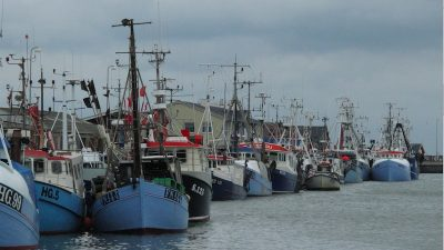 Danish POs join forces with European Fisheries Alliance