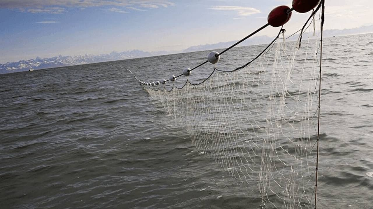 Read more about the article Time to close drift net loopholes