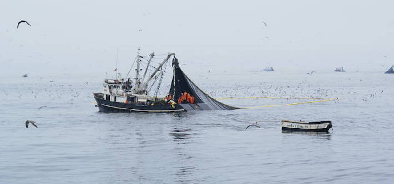 Assessing El Niño's impact on fisheries and aquaculture