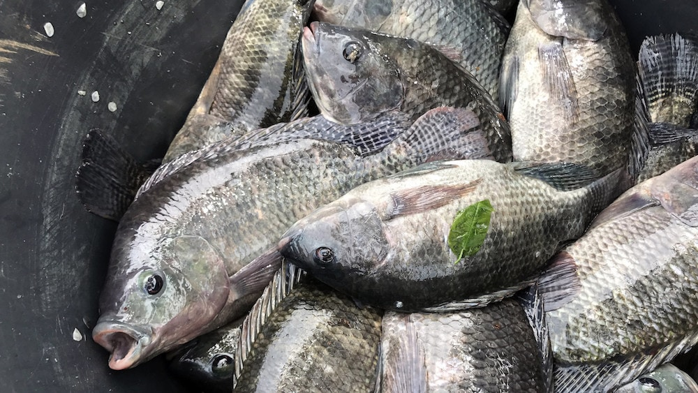 EU and Guinea Bissau sign sustainable fishing partnership agreement protocol
