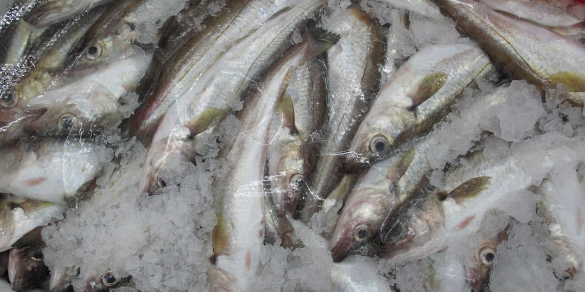 Tough competition for Boulogne's fish trade - FiskerForum
