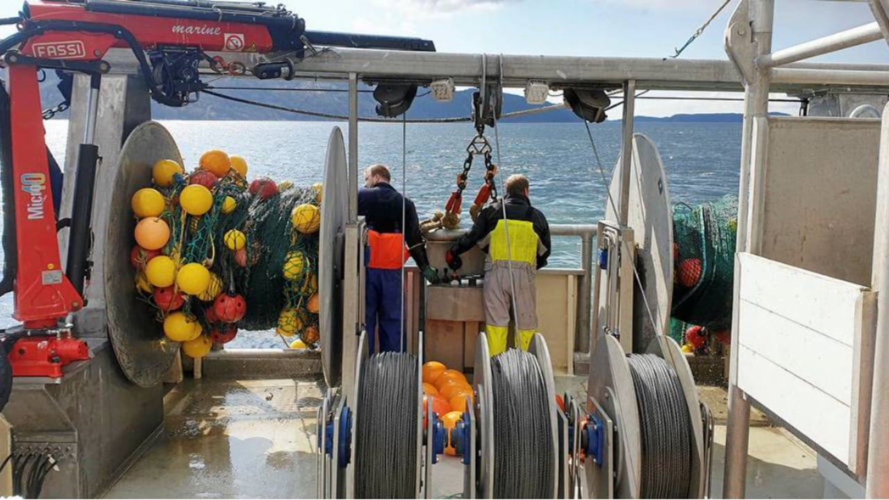 Shrimp grid developed to keep langoustine by-catch