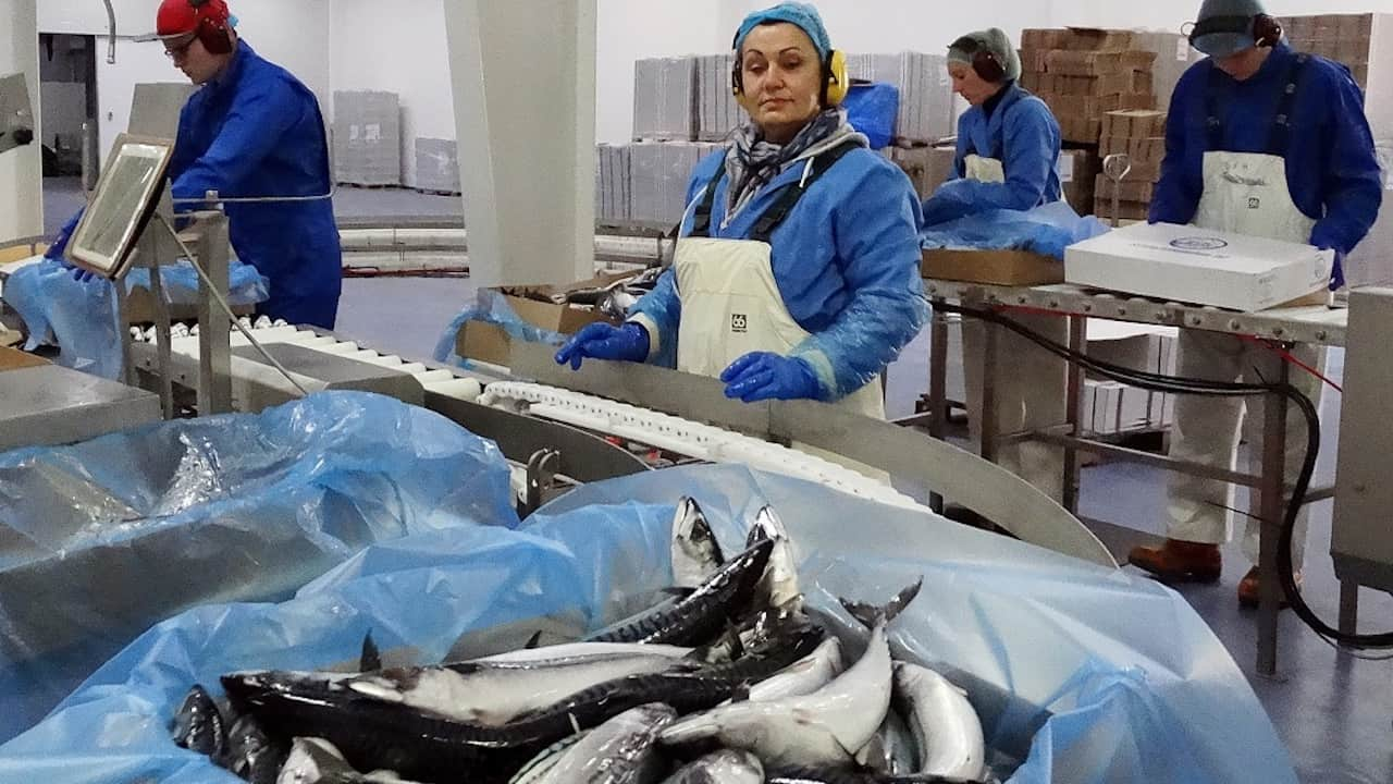 Iceland's mackerel season takes off