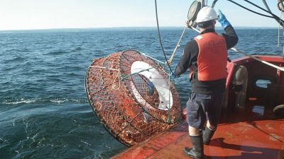 Operation Ghost recovers traps and rope from the Gulf of St. Lawrence