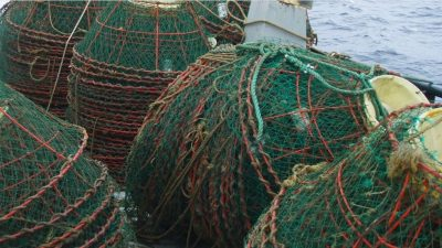1200 snow crab traps retrieved from the Barents Sea