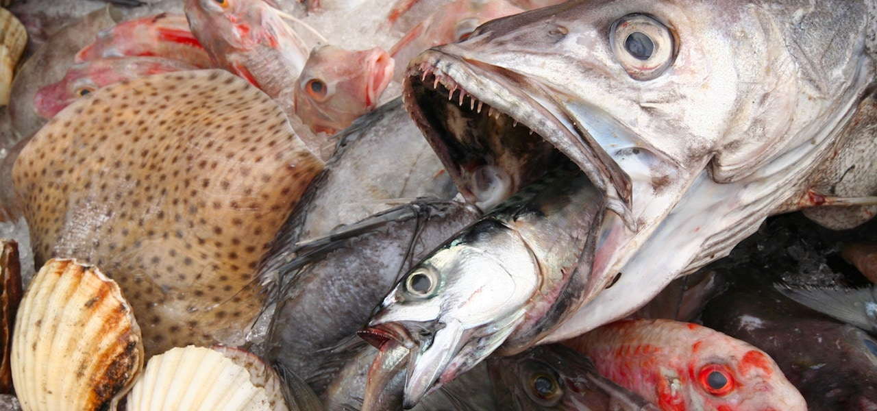 More than half of UK consumers want more seafood
