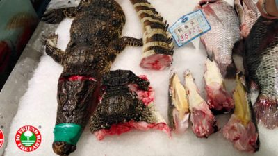 Petition to end China's wildlife food markets