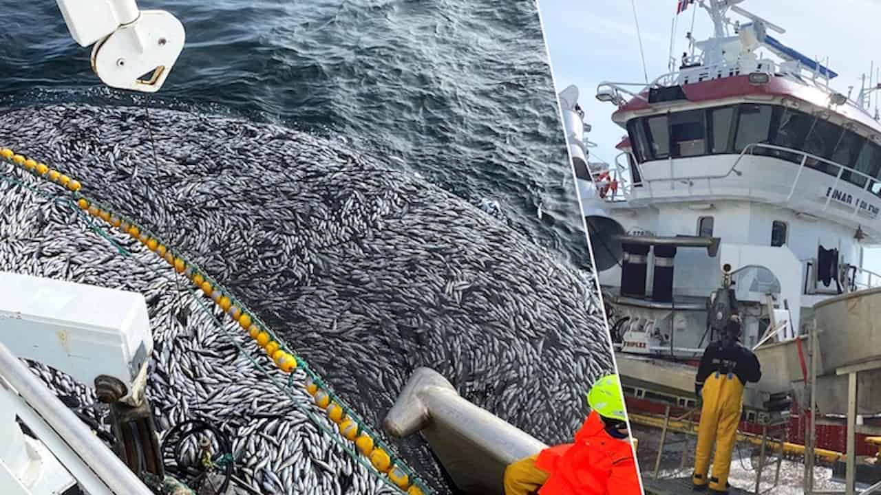 Read more about the article Norwegian mackerel season off to an early start
