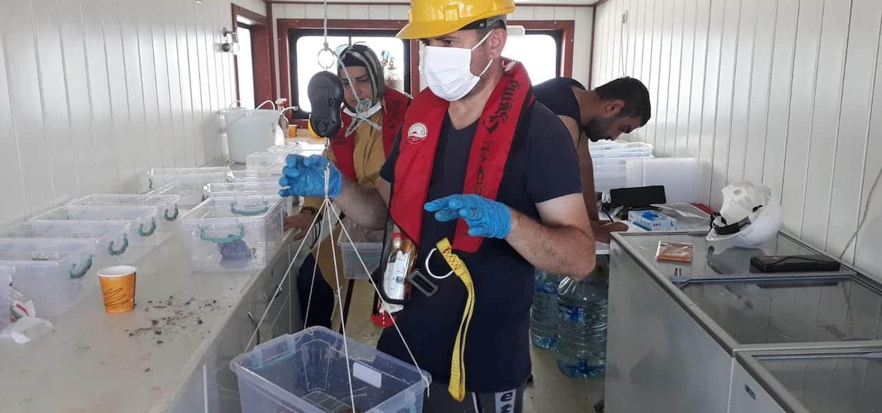 Surveying the Black Sea's rapa whelk