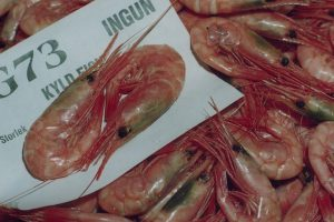 Shrimp on sale at Göteborg auction - @ Fiskerforum