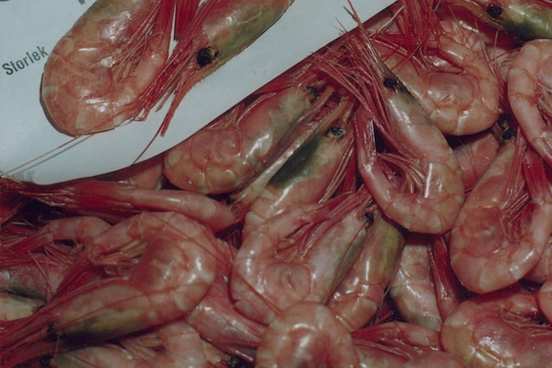 Wanted: more shrimping in the Barents Sea