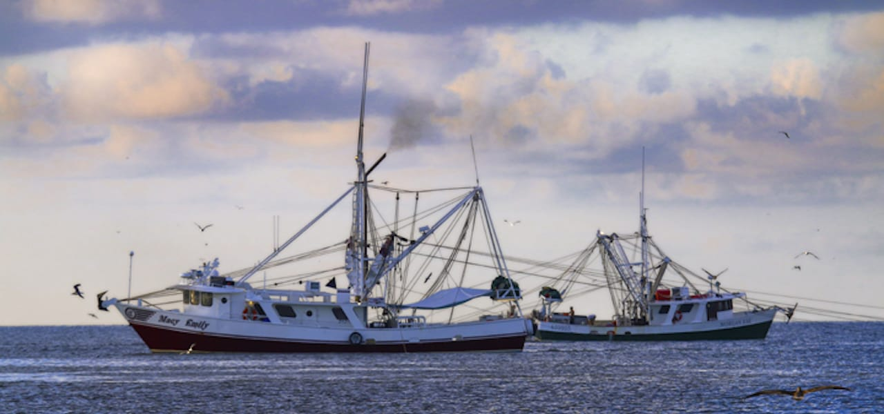 Head-on grader breaks new ground for Gulf shrimpers