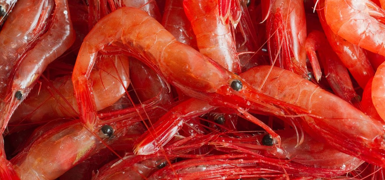 ICES advises more than double 2020 Barents Sea shrimp quota