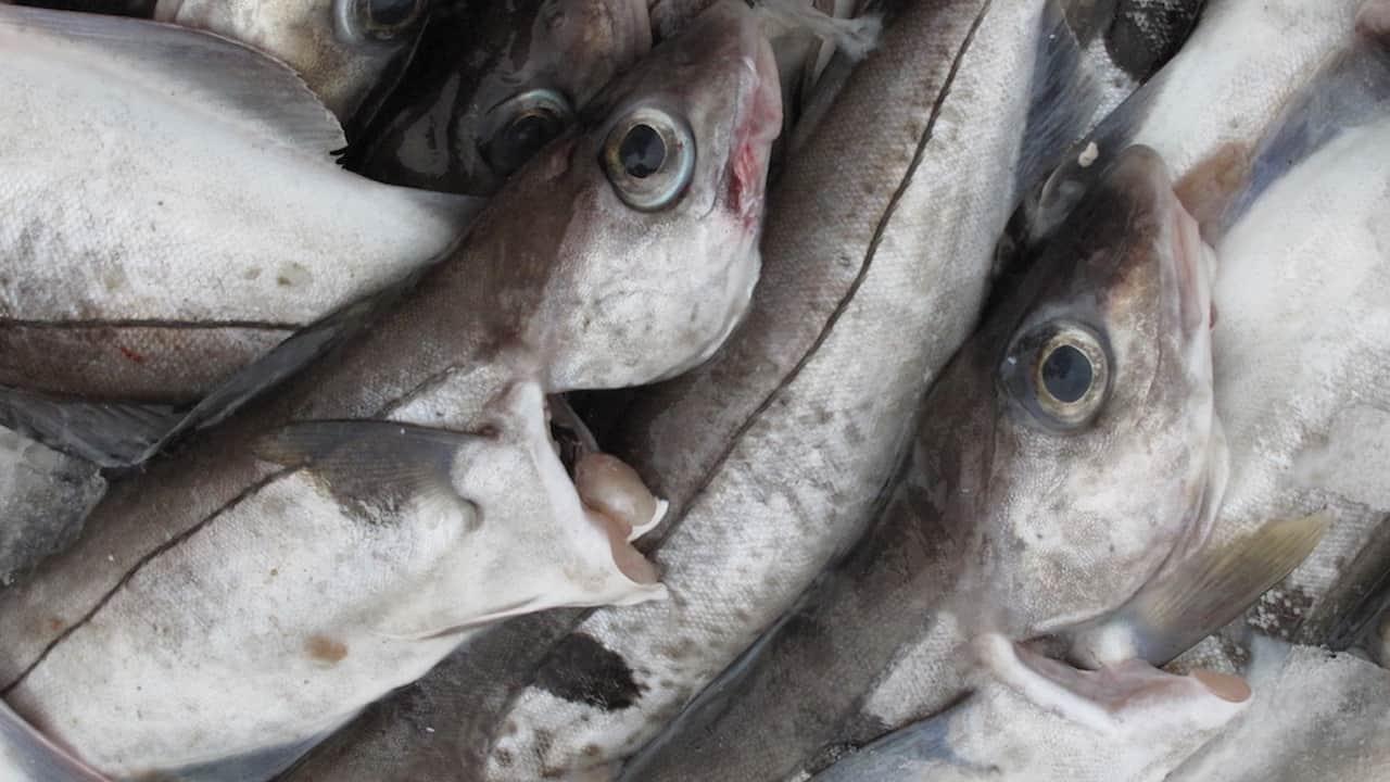 Minister boosts haddock quota