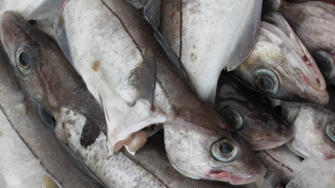 MSC clarifies Norway's cod and haddock status