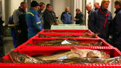 Fishermen's organisations slam North Sea cod decision